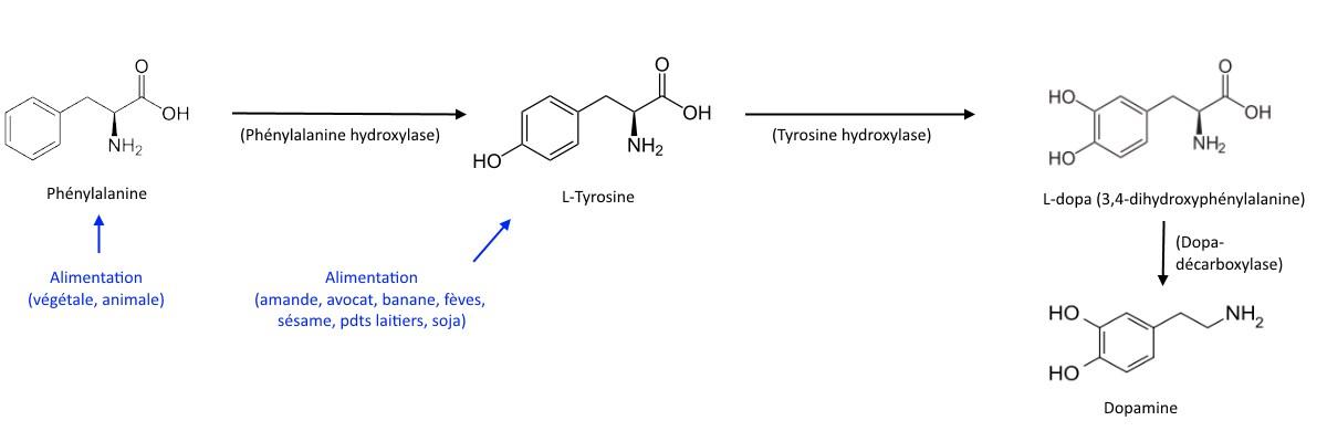 synthèse naturelle de la dopamine