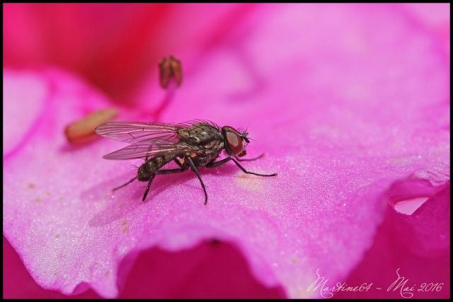 La nature en rose .... Img_2817