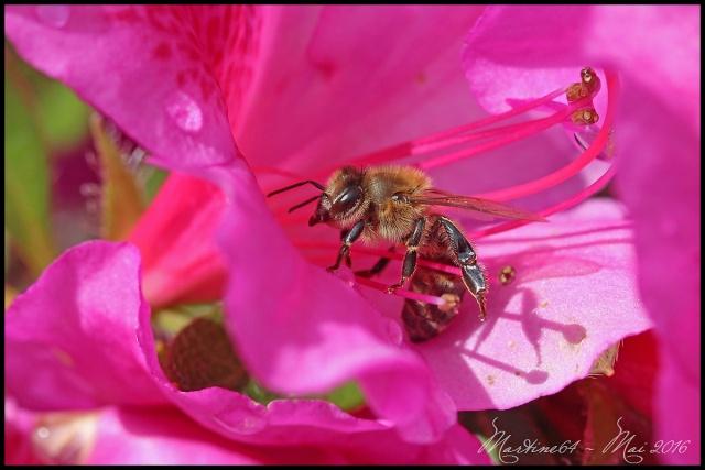 La nature en rose .... Img_2910