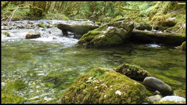 ruisseau - Sortie sur un nouveau ruisseau. Rimg1022
