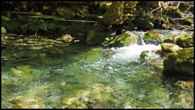 ruisseau - Sortie sur un nouveau ruisseau. Rimg1028