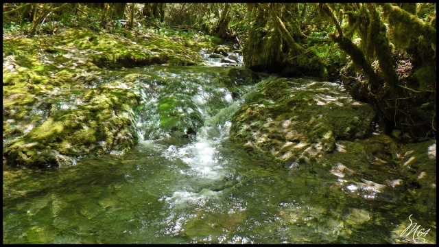 ruisseau - Sortie sur un nouveau ruisseau. Rimg1029