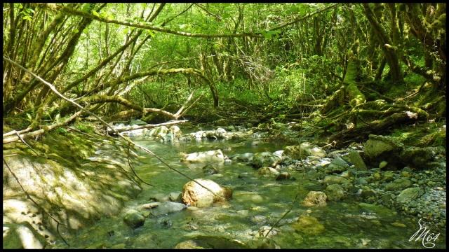 ruisseau - Sortie sur un nouveau ruisseau. Rimg1030