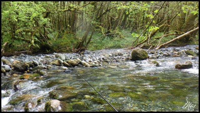 ruisseau - Sortie sur un nouveau ruisseau. Rimg1034