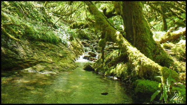 ruisseau - Sortie sur un nouveau ruisseau. Rimg1036