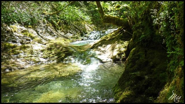 ruisseau - Sortie sur un nouveau ruisseau. Rimg1037