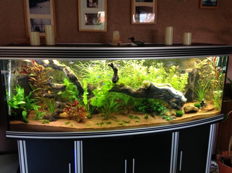 je me présnte  et mon aquarium Img_0110