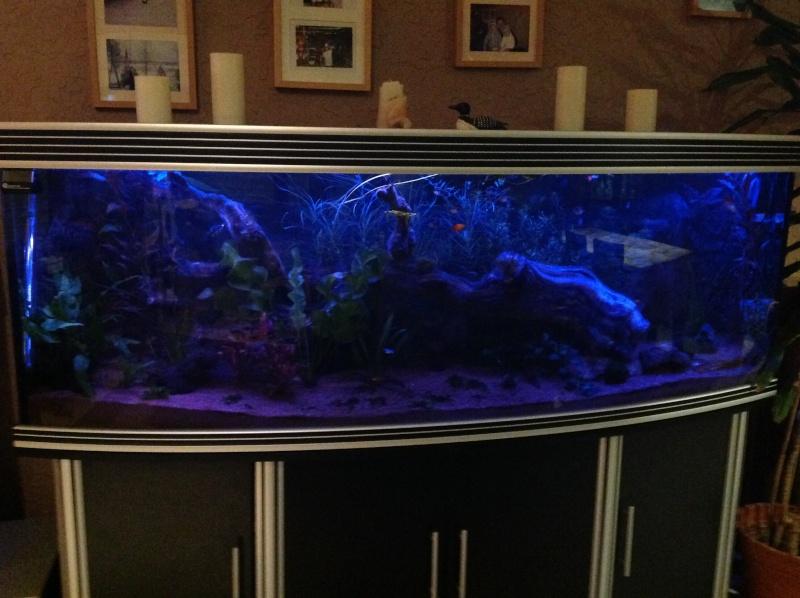 je me présnte  et mon aquarium Img_0111