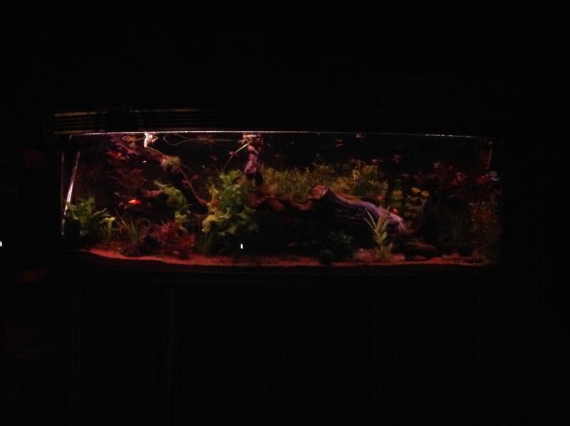 je me présnte  et mon aquarium Img_0220