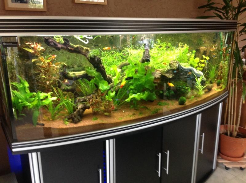 je me présnte  et mon aquarium Img_0224