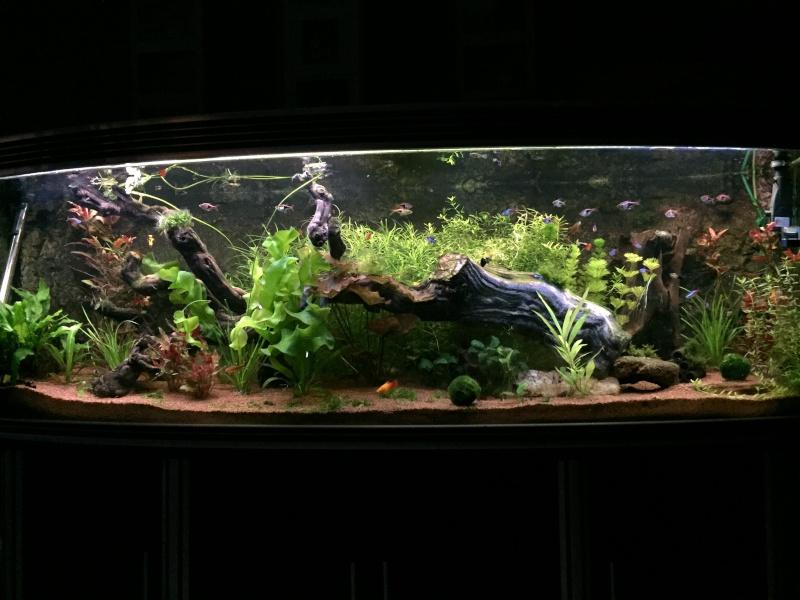 je me présnte  et mon aquarium Img_0510