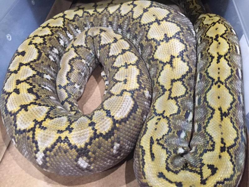 La maintenance des serpents en Amérique du nord 13178610