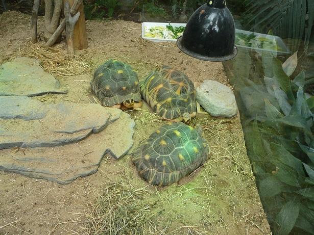 Zoo de paris / Avril 2016 Astroc10