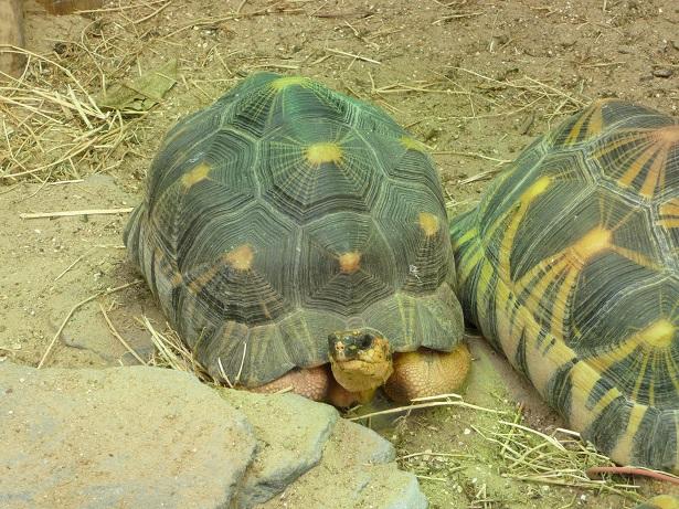 Zoo de paris / Avril 2016 Astroc11
