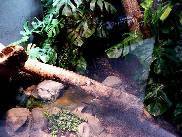 Zoo de paris / Avril 2016 Bcc10