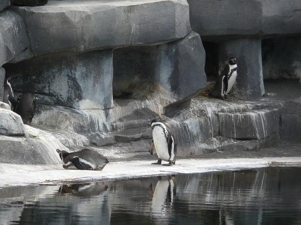 Zoo de paris / Avril 2016 Des_pi10