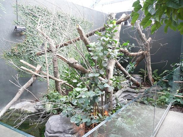Zoo de paris / Avril 2016 Enclos10