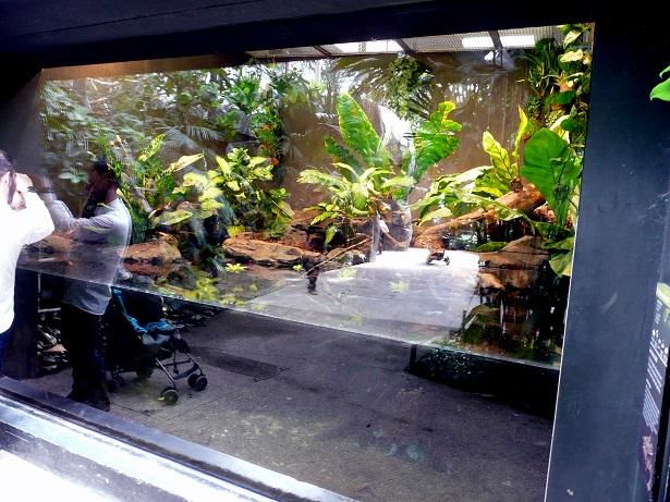 Zoo de paris / Avril 2016 Enclos12