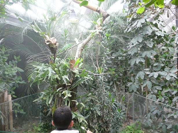 Zoo de paris / Avril 2016 Enclos13