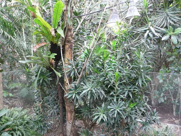 Zoo de paris / Avril 2016 Enclos14