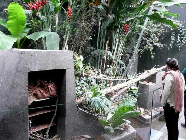 Zoo de paris / Avril 2016 Enclos15