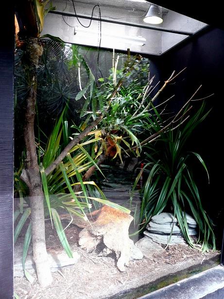 Zoo de paris / Avril 2016 Enclos16