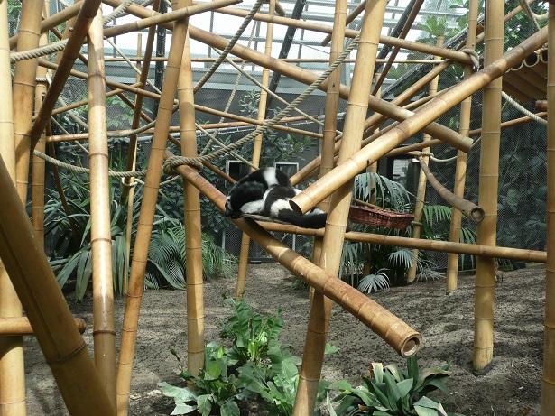 Zoo de paris / Avril 2016 Un_tru10