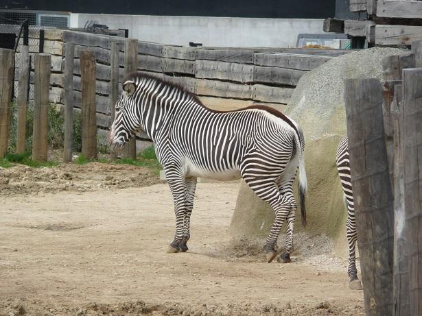 Zoo de paris / Avril 2016 Un_zyb10