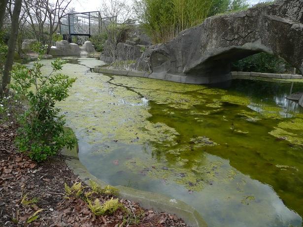Zoo de paris / Avril 2016 Vase10