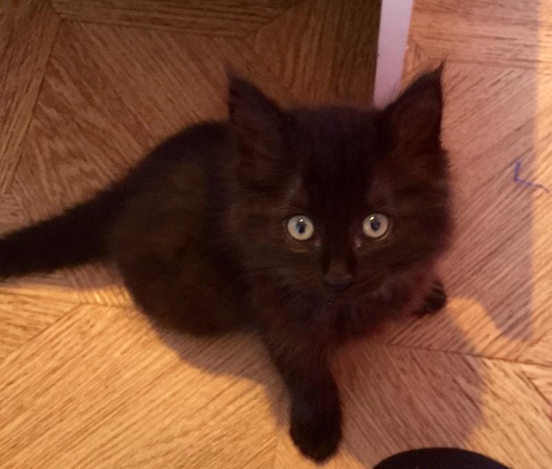 MISHKA (Black Pearl)  Image14