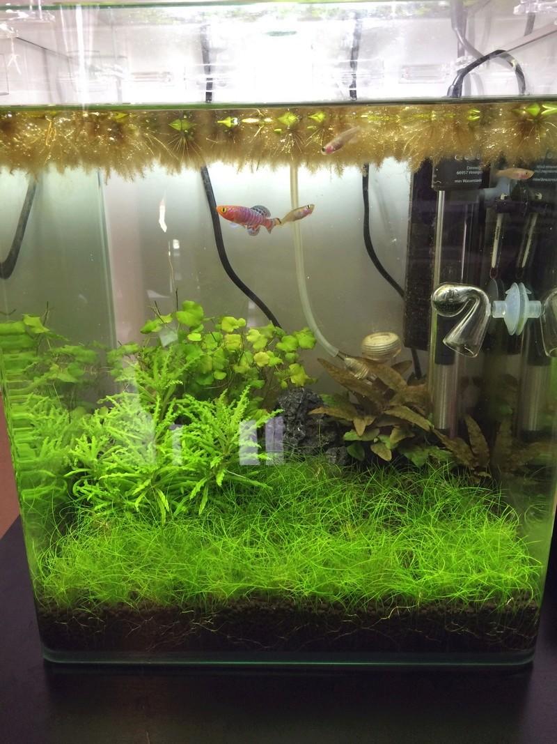 Premier aquarium : Nano cube 30l Img_1011
