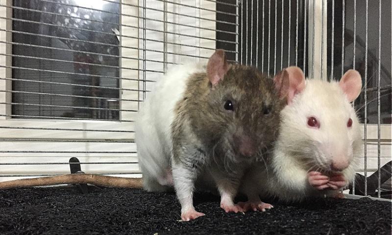 Et voici notre bébé Rat des champs : Ratatouille  - Page 37 Img_2710