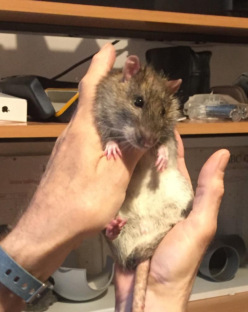 Et voici notre bébé Rat des champs : Ratatouille  - Page 38 Img_4410