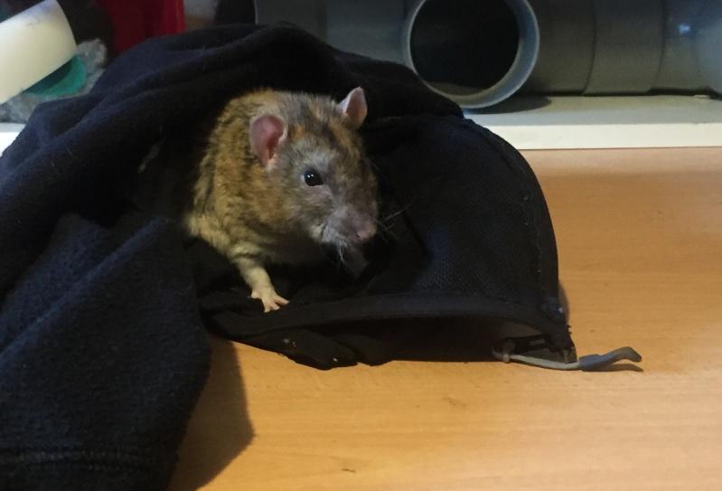 Et voici notre bébé Rat des champs : Ratatouille  - Page 38 Img_4411