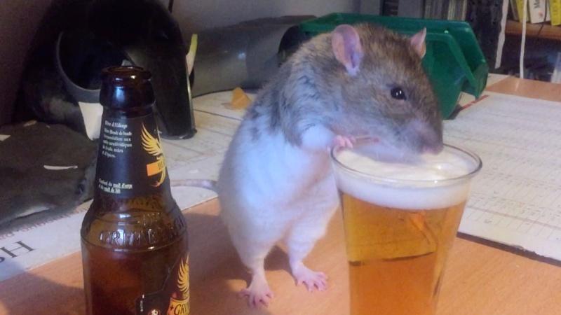 Et voici notre bébé Rat des champs : Ratatouille  - Page 37 Une_pe10