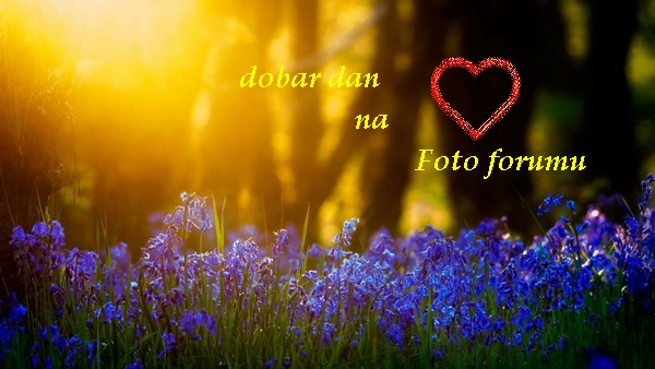 Dobro jutro , dobra večer , laku noć  :) - Page 5 Image610