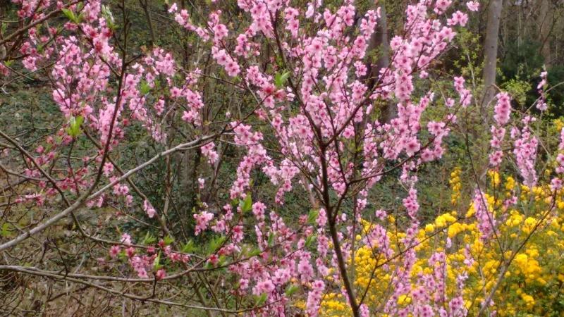Floraisons du mois d'avril - Page 19 Img_2019