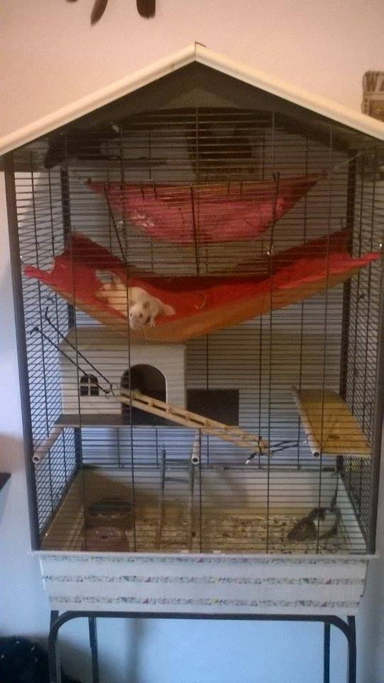la cage e mes petites crottes  13023710