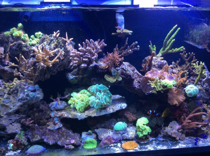 Présentation de mon Reefer 450 - Page 5 Image24