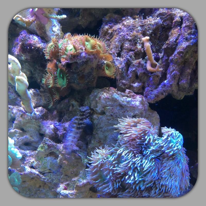 Présentation de mon Reefer 450 - Page 5 Image42