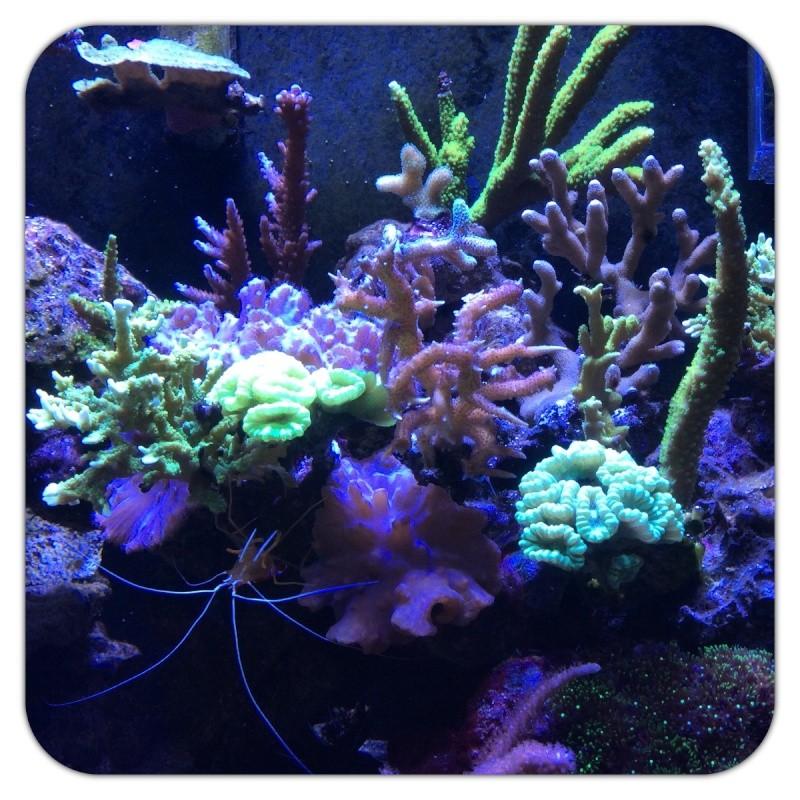 Présentation de mon Reefer 450 - Page 7 Image68