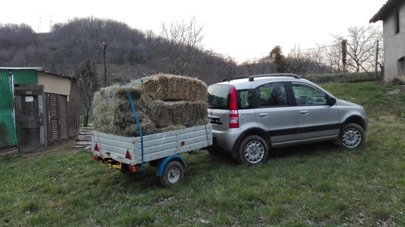 Consiglio Auto + rimorchio leggero per trasporto legna Img_2010
