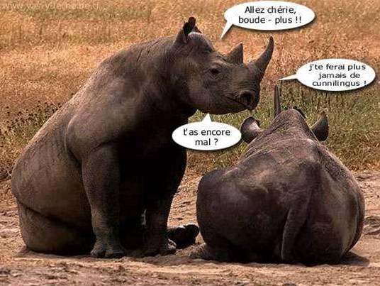 HUMOUR - Drôles de bêtes... - Page 17 00110