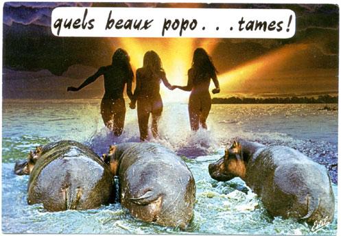 HUMOUR - Drôles de bêtes... - Page 18 09112210
