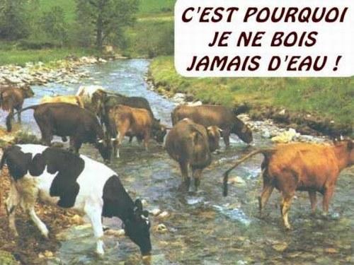 HUMOUR - Drôles de bêtes... - Page 17 28880910