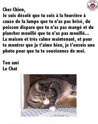 HUMOUR - Drôles de bêtes... - Page 17 2i8rz911