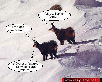 HUMOUR - Drôles de bêtes... - Page 18 2zedz210