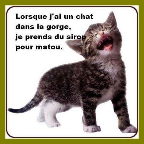 HUMOUR - Drôles de bêtes... - Page 20 32641610