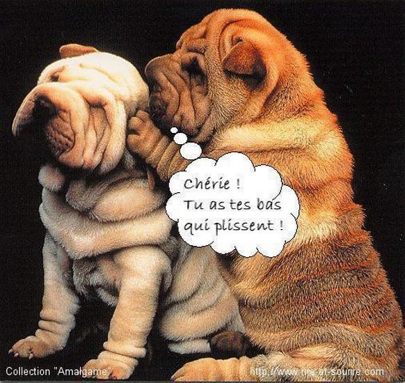 HUMOUR - Drôles de bêtes... - Page 18 4d6d8810