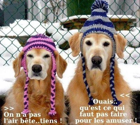 HUMOUR - Drôles de bêtes... - Page 20 50766210